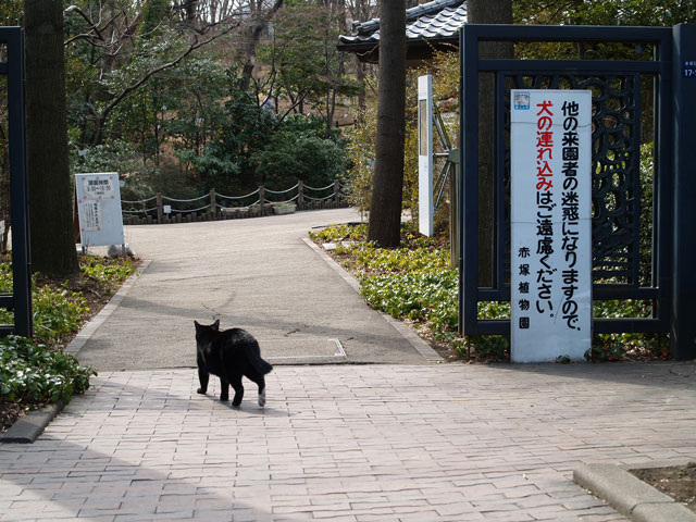 Tokyodaibutu09