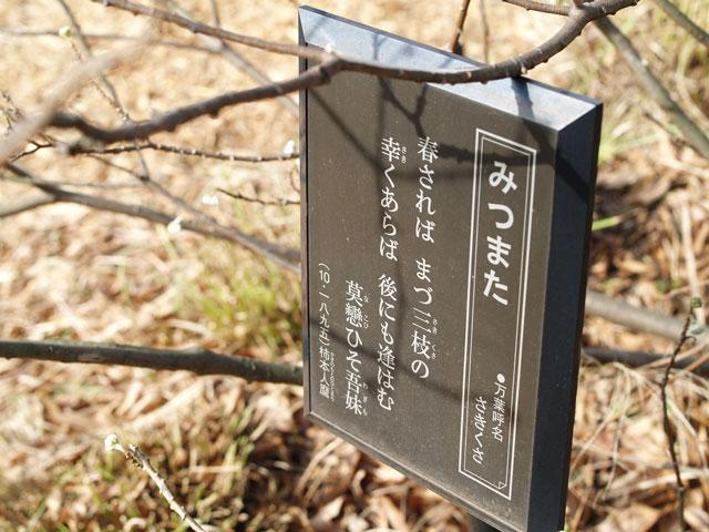 Tokyodaibutu12